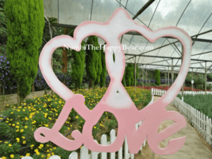 love couple photos genting lavender farm