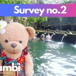 The Ultimate Worldwide Teddybears & Plushies Survey 2019